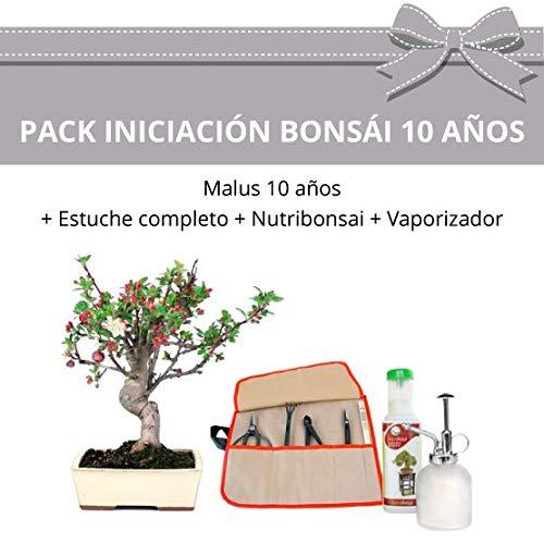 CENTROBONSAI Pack Iniciación Bonsái Malus 10 años