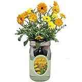Environet Hydroponic Calendula Growing Kit, Self-Watering Mason Jar Garden Starter Kit Indoor, Grow Calendula from Seeds