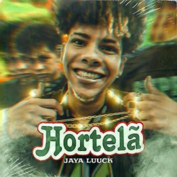 Hortelã