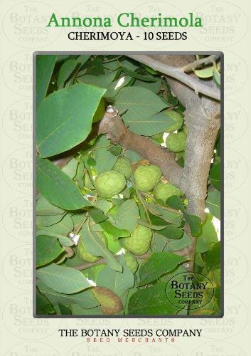 Annona Cherimola (10) Saatgut - Cherimoya Samen [Cherimoya]