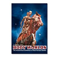Body Worlds The Anatomical Exhibition of Real Human Bodies - DVD
