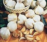Risitar Graines -Ail rose Gayant/Ail violet Germidour 20/50pcs, Graines de légumes jardin plante vivace résistante au froid