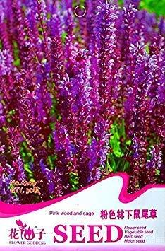 A bag = 200pcs Cymbidium Orchid, Multi Color Cymbidium Orchid Plant, Bonsai Flower Seeds,Natural Growth,Plant for Home Garden 9