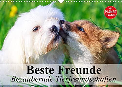 Beste Freunde. Bezaubernde Tierfreundschaften (Wandkalender 2022 DIN A3 quer)