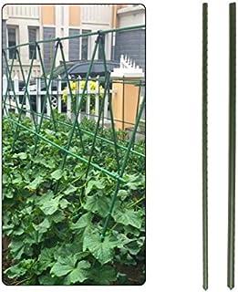 Sunflower FLOR78470 Tutore in Legno con Fibra in Cocco 60 cm 5x5x61 cm Estendibile 12 unit/à