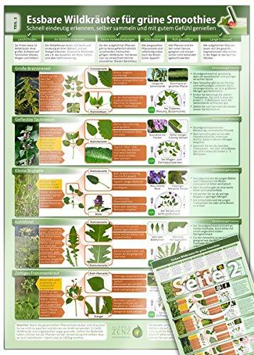 Essbare Wildkräuter für Grüne Smoothies - Erkennungskarte Teil 2 (2020): Schnell eindeutig erkennen, selber sammeln und mit gutem Gefühl genießen ... selber sammeln und mit gutem Gefühl genießen)