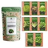 Lettuce & Salad Greens Seed Vault - Non-GMO...