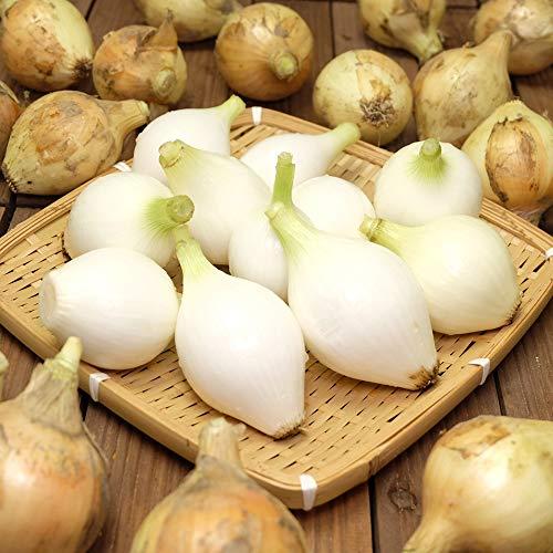 【セール】玉ねぎ5kg (2S〜3Sサイズ) 自然農法 (兵庫県淡路島 花岡農恵園) 産地直送 ふるさと21