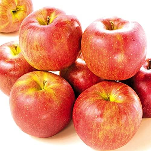 国華園 りんご 長野産 シナノスイート 5�s 1箱 食品
