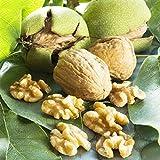 KINGDUO Egrow 2 Unids/Bag Green Walnut Seeds China Specialty Green Walnut Seeds Nuevas Semillas De Nogal Raro