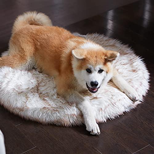 Luxus Kunstfell Orthopädisches Hundebett Memory Foam Hundebett für Kleine, Mittel, Große und XL Haustiere, Flauschiger Welpen-Teppich mit Wasserdichtem und Waschbarem Softbezug, Knochenweiß (24x24))