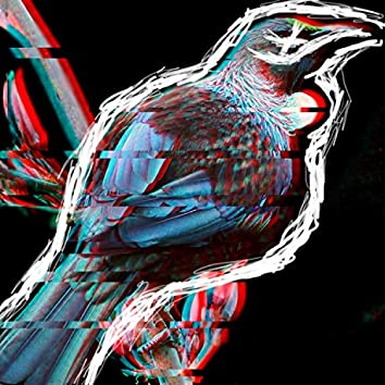 The Tui Bird