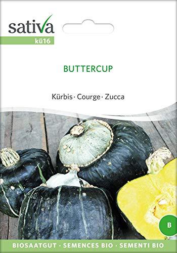 Sativa Rheinau kü16 Kürbis Buttercup (Bio-Kürbissamen)