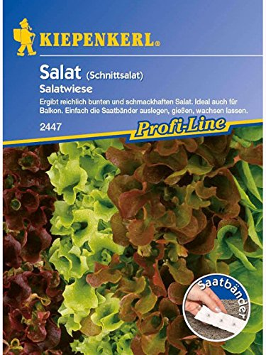 Salat Schnittsalat Babyleaf Salatwiese
