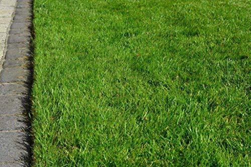 Grassamen Rasensamen Gerbrauchsrasen für Trockenlagen RSM 2.2.2, 5 kg für 125m²