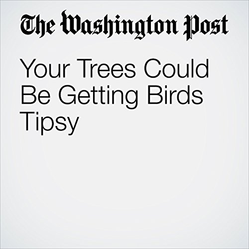 Your Trees Could Be Getting Birds Tipsy cover art