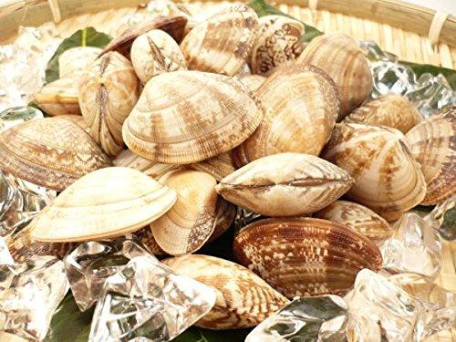 殻付き あさり 500g 冷凍 お吸い物や深川煮など様々な料理に 便利な殻つきアサリ 業務用 ・殻付あさり・
