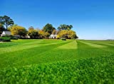 Best Bermuda Grass Seeds - Hancock's Common Bermuda Grass Seed (Hulled) Review