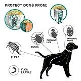 IMG-2 zed collare antiparassitario cane antipulci