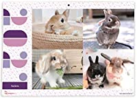 365カレンダー 2021年 ウサギ カレンダー 壁掛け 卓上付き 2021-002