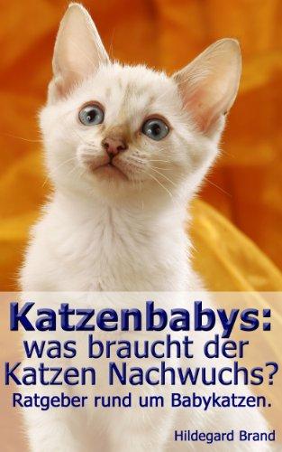 Katzenbabys:  was braucht der  Katzen Nachwuchs?: Ratgeber rund um Babykatzen