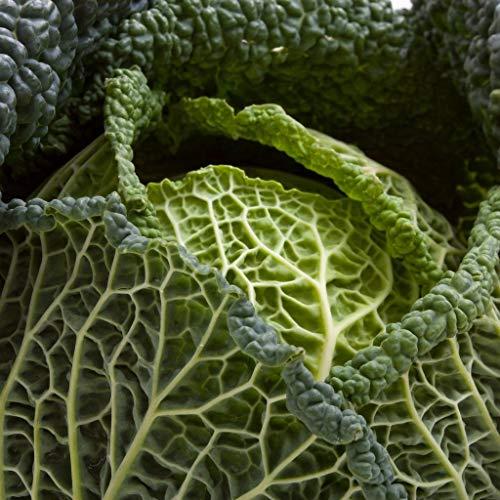 SANHOC Samen-Paket: GROSEEDS - Gemüsesamen, Wirsing - Vertus, V-CAB-05, 450 Samen Minimum pro PacketSEED