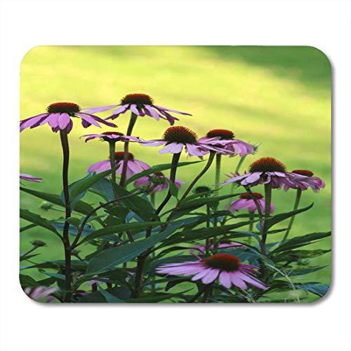 Mauspads Schönheit Bunte Asteraceae Echinacea Sonnenhut Pflanzen Grün Schöne Biene Mauspad für Notebooks, Desktop-Computer Mausmatten, Büromaterial