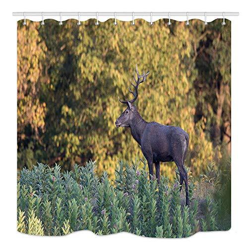 CICIDI Wildlife in Natural Habitat Duschvorhang, Roter Hirsch mit schönem Geweih stehend auf Wiese mit Wald, Stoff Badezimmer Dekor, Badvorhänge Zubehör, mit Haken, 72 x 72 Zoll