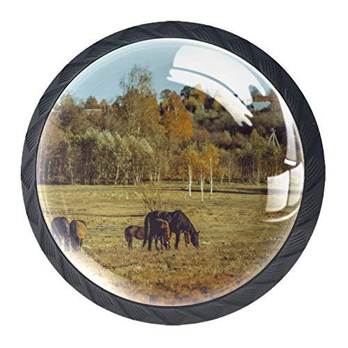 Pomos para cajón de caballos, paseos, con asa de cristal, para armario, cajón, cajón, cajón, cesta, aparador, armario