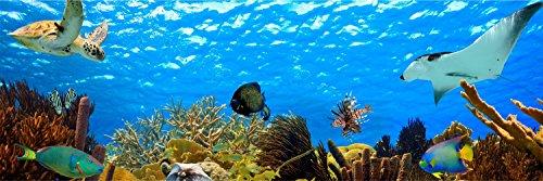 Unterwasser Schildkröte Riff Fische Panorama Wandtattoo Bild Poster Aufkleber W0018 Größe 200 cm x 66 cm