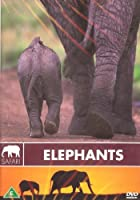 ELEPHANTS - SAFARI [DVD] BELLEVUE ENT NEW DVD -967 (1 CD)