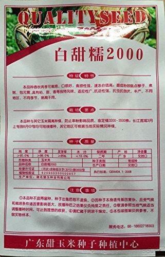 1 original 25g pack 30 + blanc semences de maïs cireux, doux glutineux fruit maïs vert sain Delicious Food livraison gratuite