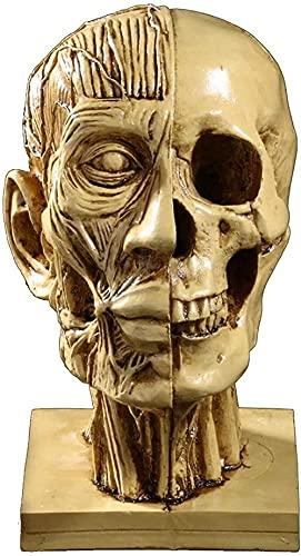 LONGJIQ Escultura de mesa de cabeça humana escultura meio caveira, meio modelo muscular, ensino médico, fenomenologia, cabeça de resina, artesanato, estatuetas de arte, fantástica