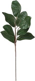 Magnolia Leaf Spray 24