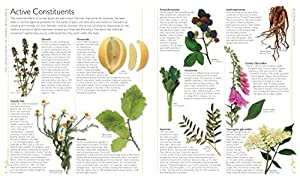Encyclopedia of Herbal Medicine: 550 Herbs and Remedies for Common Ailments #2