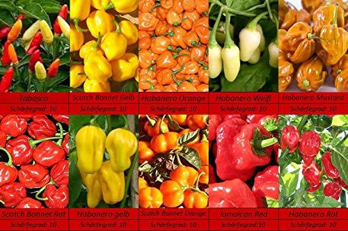 Extrem Scharfe Habanero Bonnet Tababasco Chili Samen, Schärfste Sorten, 10 Sorten Schärfe 10
