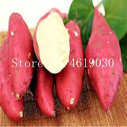 200 Stück Lila Süßkartoffeln Bonsai Batatas Köstliche Zutaten Bio-Non GMO Gemüse für landwirtschaftliche Bepflanzung: 2