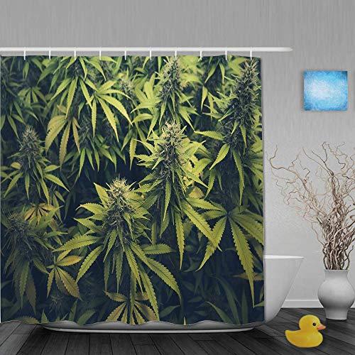 N\A Duschvorhang, grünes Gras Cannabis Knospe Marihuana Pflanzen Marihuana Sativa Hanf Indica Grow Farm, Stoff Stoff Badezimmer Dekor Set mit Kunststoffhaken