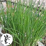 XQxiqi689sy 150 Unids/Bolsa Semillas De Puerro Semillas De Cebollino De Plantación De Vegetales De Alto Rendimiento Para El Hogar De Bricolaje Natural Semillas de cebolla verde