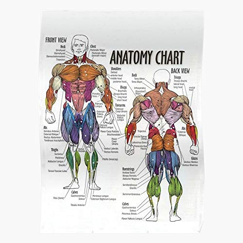 Diagram Workout Fitness Anatomy Gym Muscle Chart Exercise Home Decor Wall Art Print Poster !