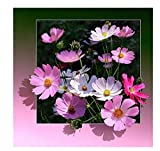 MDGCYDR Cuadro de Flores Kit de póster de Flores Póster 15 * 20cm(6 * 8inches)