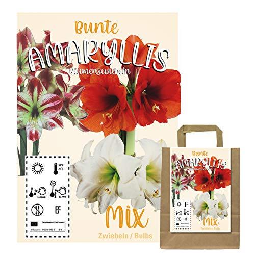 Verschiedene Blumenzwiebeln in Geschenkverpackung - Zwiebeln, Knollen verschiedener winterharter Pflanzen für Garten und Balkon - bunt, mehrjährig, für Topf und Beet (3 Amaryllis Zwiebeln ROT)