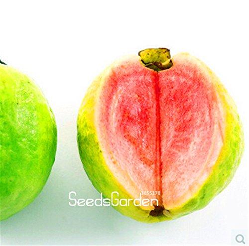 Big Promotion! 10 pcs / graines Pack, Balcon patio en pot arbres fruitiers plantés, les graines Psidium, semillas de frutas, # 69QGRQ