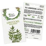 Premium Liebstöckel Samen (Levisticum officinale) mehrjährig, Liebstöckel Samen – Maggikraut zum Anbau im Garten und auf dem Balkon, für ca. 100...