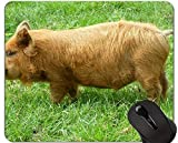 Yanteng Animal Design Cute Baby Pig Mousepad, Kune Kune Pigs Alfombrillas De Raton