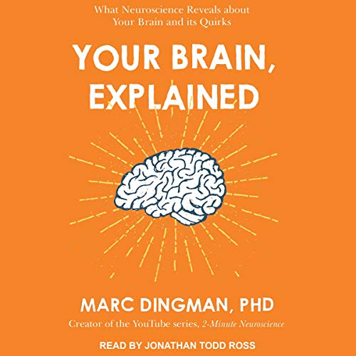Your Brain, Explained audiobook cover art