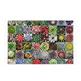 KLL Succulent Plants Puzzles for Adults 500 and 1000 Piece Wooden Jigsaw Puzzles Educational Intellectual Decompressing Funny Game for Adults and Kids