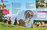 WAS IST WAS Pferde und Ponys: Reiten, Fohlen, Pferdesprache, Turniere, Zucht und Pflegepferd! (WAS IST WAS Edition) - 10