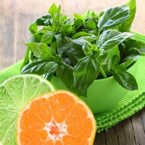 Lime Basil Seeds * Citrus Flair * Zesty arôme de citron vert * 100 graines * Gourmet *