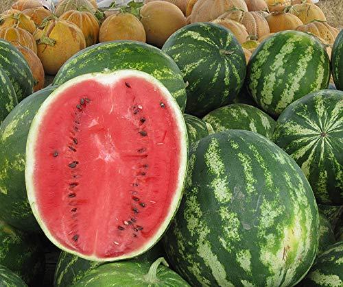 Bobby-Seeds Melonensamen Crimson Sweet - Wassermelone 50 Korn